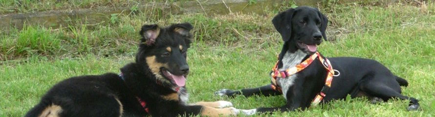 Hundeverein Schäferhundeverein Hundeschule Rheinstetten Mörsch